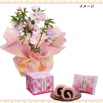 御殿場桜とひと切れ一六タルト(桜)