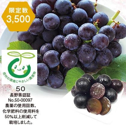 長野県産 特別栽培種なし巨峰