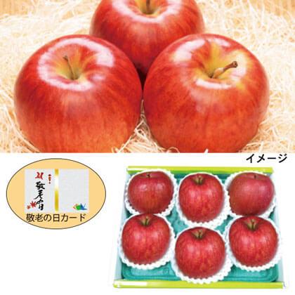 青森県産 サンつがるりんご