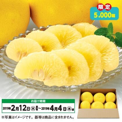 高知県産土佐文旦(3kg)