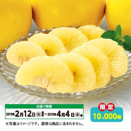 高知県産土佐文旦(5kg)