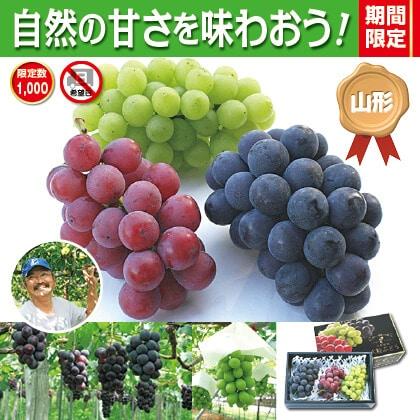 山形ぶどう園 種なし3種3色ぶどう