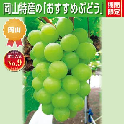 岡山県産桃太郎ぶどう(種なし)