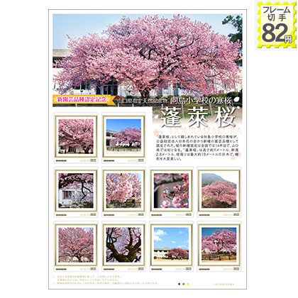 新園芸品種認定記念 向島小学校の寒桜 蓬莱桜
