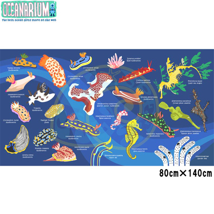 【OCEANARIUM】ドライタオル T01 Nudibranch identification 80cm x 140cm