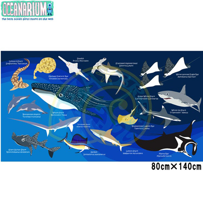 【OCEANARIUM】ドライタオル T02 Sharks identification  80cm x 140cm
