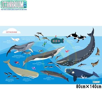 【OCEANARIUM】ドライタオル T04 Whales identification   80cm x 140cm