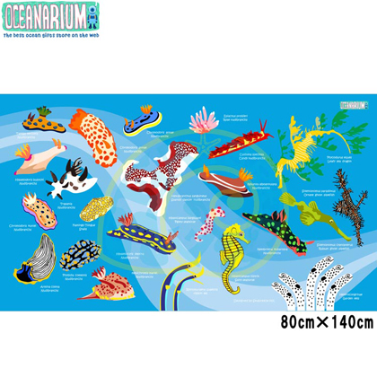 【OCEANARIUM】ドライタオル T09 skyblue nudibranches identification dry towel 80cm x 140cm