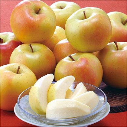 青森県産「トキ」りんご 2.7kg