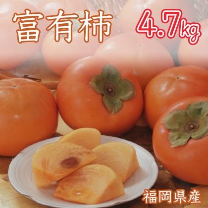 富有柿 4.7kg 福岡県産