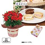 <※母の日対象商品>カーネーション(赤)&ナボナロングライフ