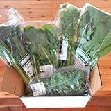 有機野菜JAS認証 緑の野菜5品セット