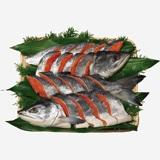 [手塩鮭]新巻鮭姿切り